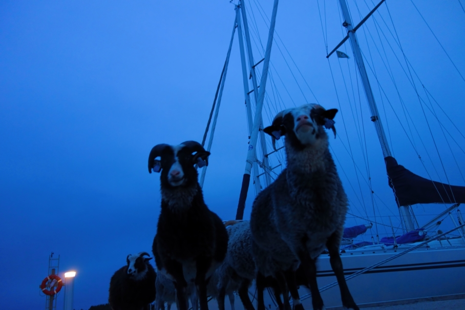11827016-bocks-on-the-dock
