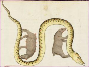 ludovicusdeangulus
